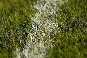 Turf Close-up photo