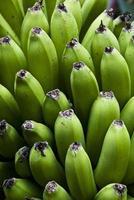 jardim da natureza - bananas verdes