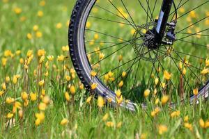 Bike wheel on flower meadow