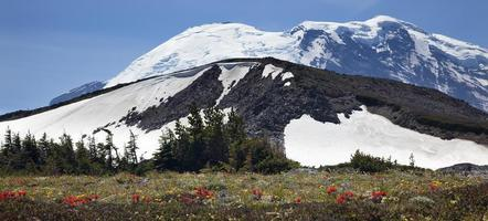 Mount Rainier Sunrise Wildflowers Snow photo