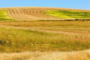 líneas de granja foto