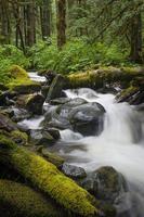 regenwoud creek