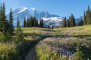 Fall blooms in Mt Rainier photo
