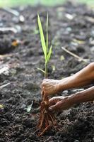 planting photo