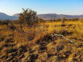 Loskop Nature Reserve photo