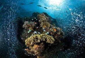 Recif corallien, sous l'eau, corail, poisson, monde marin
