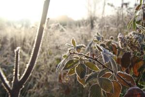frosty am photo