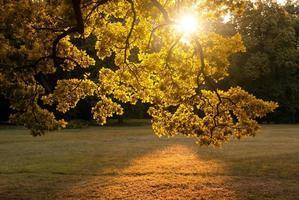 parque de otoño foto