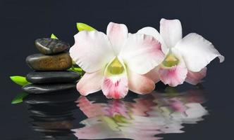 orchis and hot stones Wellness and Spa Image,dark background photo
