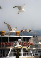 gaivotas loucas