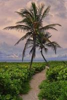 Tropical, empty beach, Miami Beach