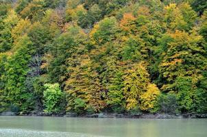 Árboles en rojo de otoño junto a agua de lago