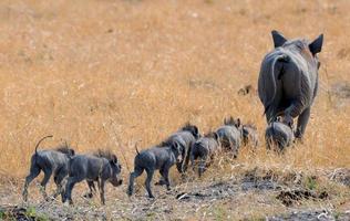 Warthog Family photo