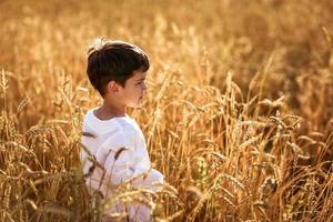 child in a field of wheat