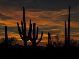 Desert sunset photo