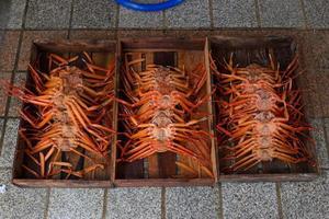 cangrejo en caja foto