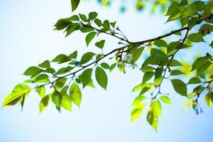 hojas verdes frescas y sol foto