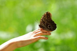 butterfly on a female hand photo