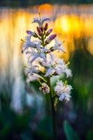 flor en puesta de sol