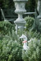 Duck statues in english garden photo
