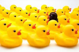 patos amarillos foto
