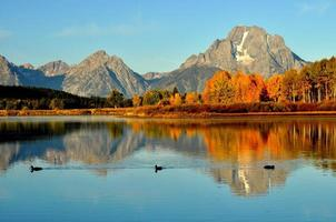 In fall, ducks swim by Oxbow Bend at sunrise.
