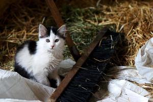 gato bebé foto