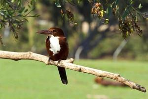 pájaro carpintero foto