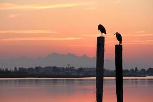 Twilight Herons, Delta, British Columbia photo