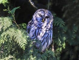 Owl winking! photo
