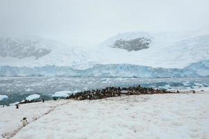 pingüinos en el puerto de neko foto