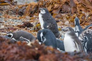 Penguins on shore among leaves
