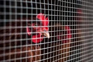 Chicken Coop. photo