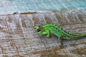 lagarto depredador foto