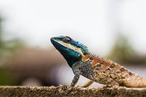 Cute Blue Lizard