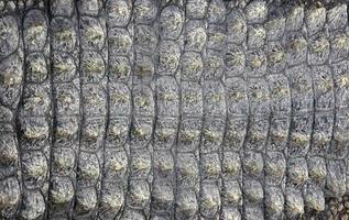Crocodile skin as background
