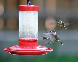 colibrí en alimentador rojo en jardín foto