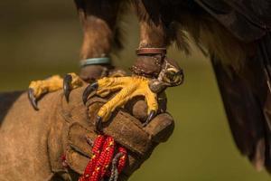 talons of an eagle photo