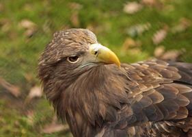 Hawk. photo
