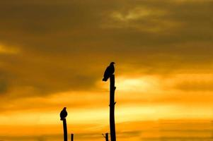 Hawk silhouettes on stilts at the lake. photo