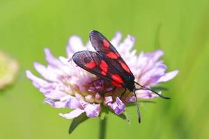mariposa en flor foto