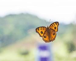 mariposa sobre vidrio y la montaña.