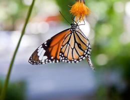 butterfly fly in morning nature photo
