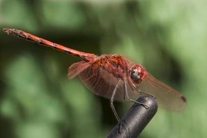 Dragon fly close up shot.
