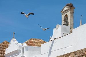Storks of Faro