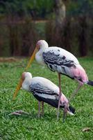 Two storks photo