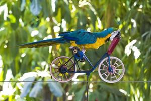parrot on a bicycle