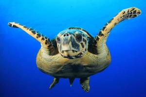 Sea Turtle photo