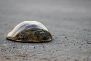 tortuga de caparazón foto