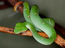 tropical green snake on a tree branch